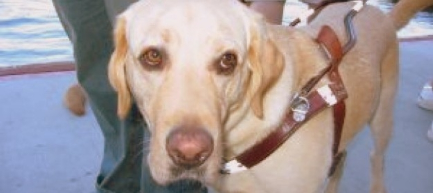 guide-dogs_2125496-001